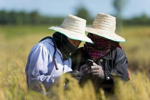 rice farmers with mobile phone photo
