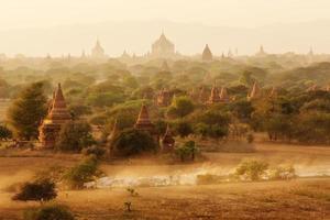 Burmese herder leads cattle herd photo