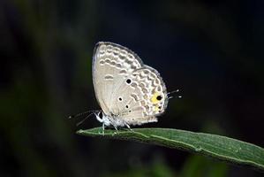 Tiny butterfly photo