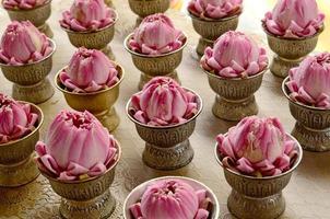 Lotus praying.