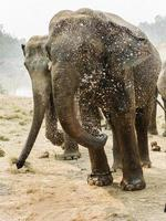 The elephant in nature photo