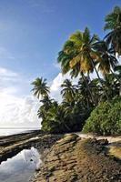 Paradise island with white beach and coconut palmtrees at shoreline