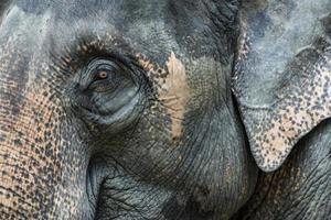 el elefante en la naturaleza foto