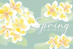White and Yellow Frangipani Flowers Watercolor vector
