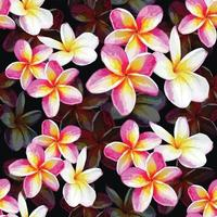 Pastel Frangipani flowers  vector