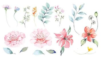 Conjunto de pétalos de flores y diseño de acuarela de flores