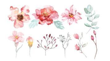 conjunto de flores y ramas de flores de acuarela