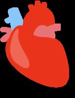 coração humano png
