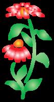 Summer flower png