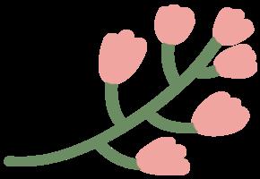 primavera del fiore