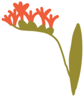 Flower hand drawn png