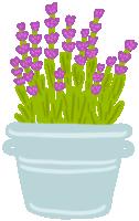 lavanda de flor em panela