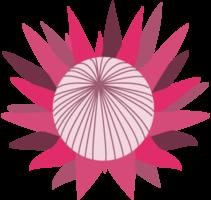 Protea Blume png