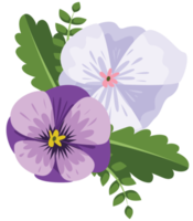 fiore viola del pensiero