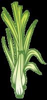 Lemongrass png