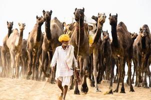 manada de camellos foto