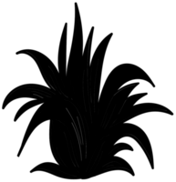 planta de aloe