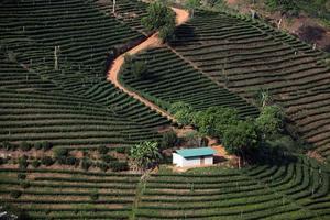 Thailand mae salong