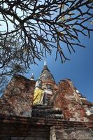 large buddha and tree