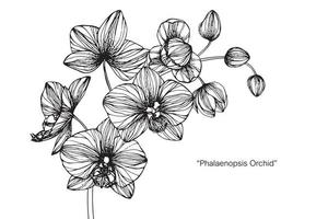 Hand drawn botanical Orchid flower and leaf vector