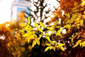 Fall foliage branches day church building photo