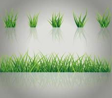 Realistic Grass Set vector
