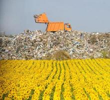 Field of sunflowers with garbage dump in the background