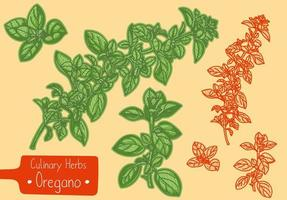 Branches of culinary herb Oregano vector