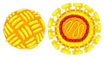 Close up diagram of zika virus vector