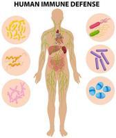 diagrama de defensa inmune humana