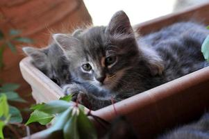 lindo gatito foto