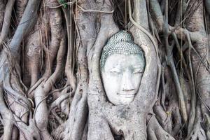 Kopf von Buddha