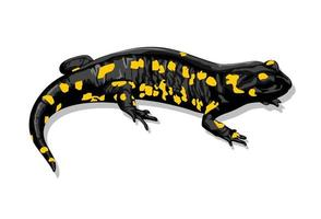 Fire Salamander Salamandra Salamandra illustrated by Charles Dessalines D39 Orbigny 1806-1876. Digitally enhanced from our own 1892 edition of Dictionnaire Universel D39 histoire Naturelle. vector
