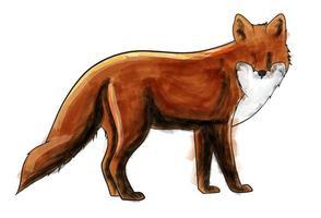 Hand-drawn fox   vector