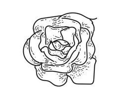 rosa, desenho, flor, natureza, vetorial, ícone, branco, fundo