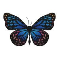 estilo de dibujo de ilustración de mariposa