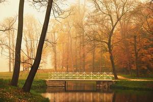 lago en el parque otoño foto
