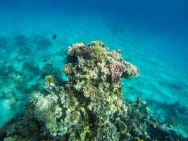 Foto submarina de coral en Egipto