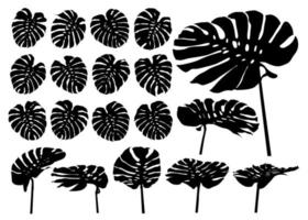 Monstera plant tropical leaves silhouette set vector