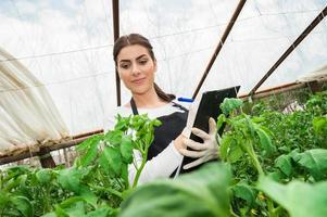 Portrait of a young woman engineer at work in greenhouse