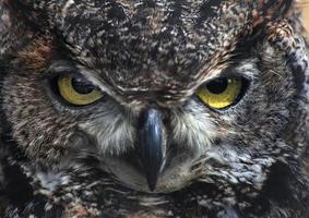 Owl Stare photo
