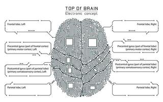 Black and white technology style brain infographic vector