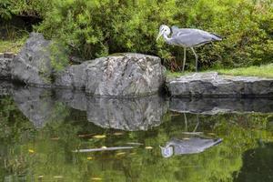 Heron water reflection photo