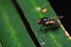 Macro view of fly on leaf