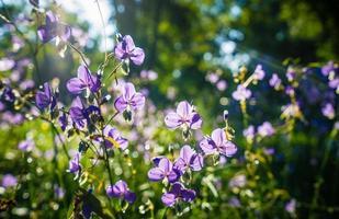 flores de serpiente con cresta en el jardín