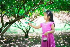 Young Asian girl collects mulberry fruit off tree