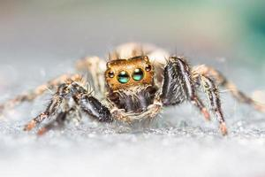 Macro brown spider in nature