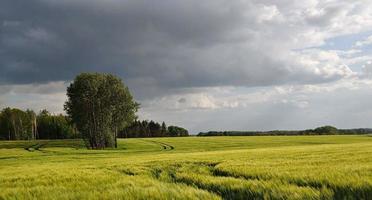 cielo de campo de grano foto
