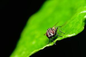 Macro fly crosses leaf