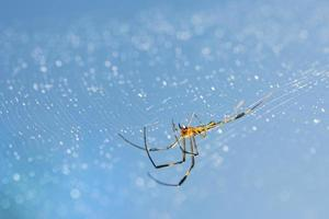 Macro spider on dewy web